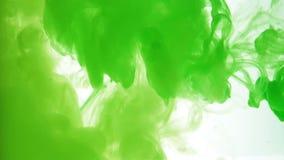 Tinta verde do close up sobre o fundo branco vídeos de arquivo