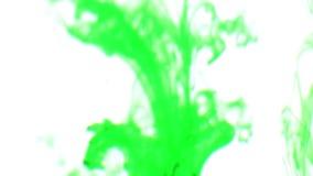 Tinta verde na água Fundo branco vídeos de arquivo