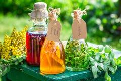 Tinte curativo en botellas con las hierbas y el alcohol fotos de archivo libres de regalías