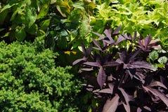Tinte del fondo de la planta verde Fotografía de archivo