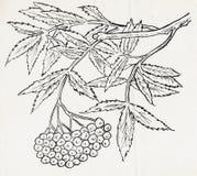 Tinte, die einen Baum zeichnet Stockfotos