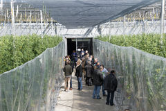People in greenhouse Royalty Free Stock Photo