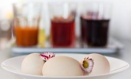 Tinte natural de los huevos de Pascua Fotografía de archivo libre de regalías