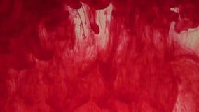 Tinte rojo en agua almacen de video
