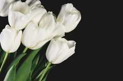 Tinted image bouquet of a white tulips on a dark background. hor. Izontal format, space for text Stock Photography