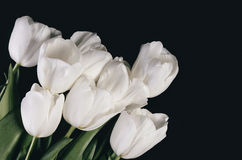 Tinted image bouquet of a white tulips on a dark background. hor. Izontal image, space for text Royalty Free Stock Images