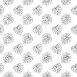 Tintenlinie Musterbeschaffenheits-Hintergrundvektor Monstera-Blattes tropische Betriebsder skizze der Kunst Hand gezeichneter nah Stockfotografie