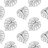 Tintenlinie Musterbeschaffenheits-Hintergrundvektor Monstera-Blattes tropische Betriebsder skizze der Kunst Hand gezeichneter nah Lizenzfreie Stockbilder