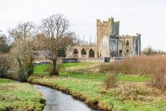 Tintern abbotskloster i Irland Royaltyfri Fotografi