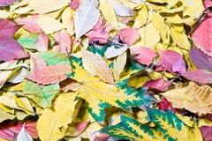 Tintes de otoño Foto de archivo libre de regalías