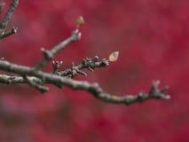 Tiny Apple Tree Leaves Royalty Free Stock Image