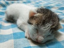 Tiny Baby Cat Sleeping Picture royalty free stock image