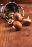 Tiny baby mushrooms champignons Stock Image