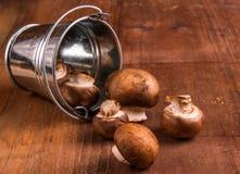 Tiny baby mushrooms champignons in a small bucket Stock Photography
