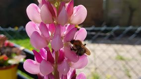 Tiny bee Stock Image
