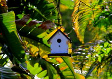 Tiny Bird house surrounded by Banana Trees at sunset in the Florida Keys Stock Image