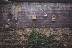 Tiny bird houses on wall with green plant growing underneath. It royalty free stock image
