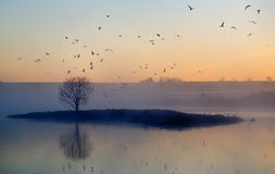 Tiny bird island dawn Royalty Free Stock Images