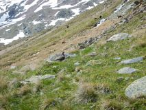 Tiny bird on a mountain meadow royalty free stock photography