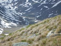 Tiny bird on a mountain meadow royalty free stock photos