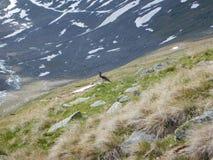 Tiny bird on a mountain meadow stock photos