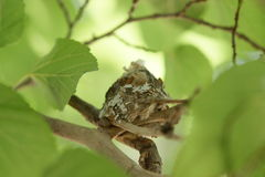 Tiny bird nest in tree Royalty Free Stock Photos