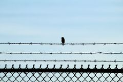 A tiny bird sitting on barbed wire above a chain linked fence. In the Bolsa Chica Wetlands in Orange County California Royalty Free Stock Photography