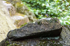 A tiny bird sitting over a rock formation Royalty Free Stock Photo