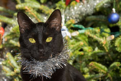 Tiny black cat wearing silver tinsel Royalty Free Stock Photography