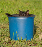 Tiny black kitten in a blue plastic bucket Stock Images