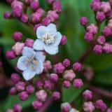 Tiny Bloomers Stock Photo