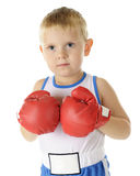 Tiny Boxer Stock Image