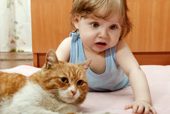 Tiny boy playing with cat house. stock photography