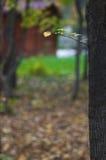 Tiny branch Royalty Free Stock Image