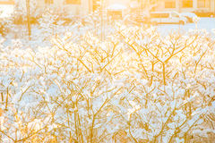 Tiny branches covered with snow Stock Photo