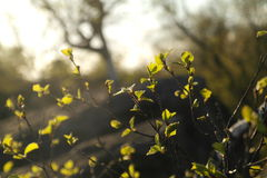 Tiny branches Royalty Free Stock Photography