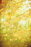 Tiny branches in sunshine. Royalty Free Stock Photo