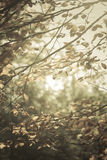 Tiny branches in sunshine. Stock Photography