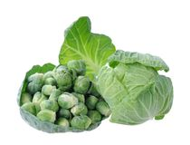Tiny brussels sprouts Royalty Free Stock Image