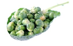Tiny brussels sprouts Royalty Free Stock Images
