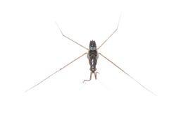 Tiny bug stock photography