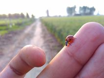 Tiny bug  walking on fingers. Tiny bug walking on fingers in sunlight Stock Image