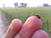 Tiny bug  walking on fingers. Tiny bug walking on fingers in sunlight Stock Photos