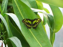 Tiny butterfly blending into its surroundings Stock Images