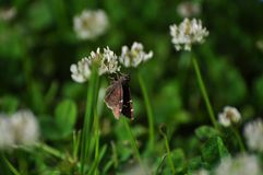 Tiny Butterfly Royalty Free Stock Image