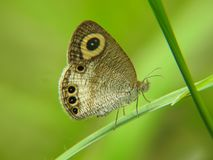 Tiny butterfly resting on a leaf end Stock Photography