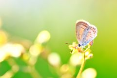 Tiny butterfly. With green background Royalty Free Stock Images