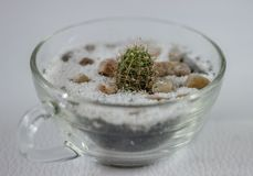 Tiny cactus in a glass pot Royalty Free Stock Photography