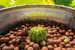 Tiny cactus in metal bucket Stock Image
