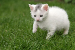 Tiny cat a little bit scared. Small young cat walking a bit hesitantly through the garden Stock Photography